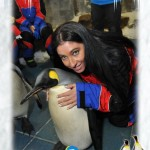 Ski Dubai Penguins - 34