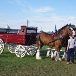 Pictou Fair Day 2-115