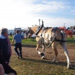 Pictou Fair Day 2-120