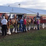 Pictou Fair Day 2-121