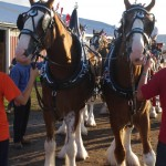 Pictou Fair Day 2-125