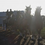 Pictou Fair Day 2-126