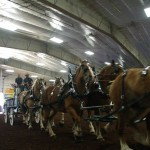 Pictou Fair Day 2-130