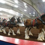 Pictou Fair Day 2-132