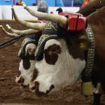 Pictou Fair Day 2-140