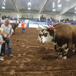 Pictou Fair Day 2-141
