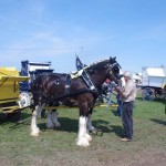 Pictou Fair Day 3-109