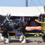 Pictou Fair Day 3-120