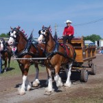 Pictou Fair Day 3-125