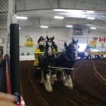 Pictou Fair Day 3-130