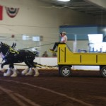 Pictou Fair Day 3-132