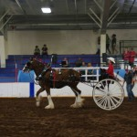 Pictou Fair Day 3-146