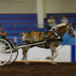 Pictou Fair Day 3-152