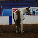 Pictou Fair Day 4-105