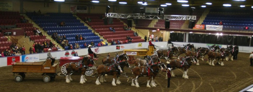 Six Horse Clydesdale Hitch-123