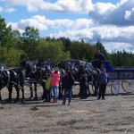 Six Horse Hitch Final-111