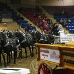 Six Horse Hitch Final-138