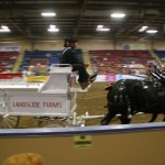 Six Horse Hitch Final-140