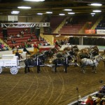 Six Horse Hitch Final-146