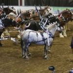 Six Horse Hitch Final-147