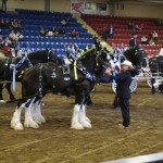 Six Horse Hitch Final-153