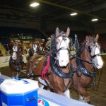 Six Horse Clydesdale Hitch-103