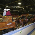 Six Horse Clydesdale Hitch-104