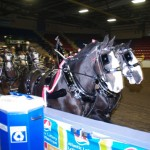 Six Horse Clydesdale Hitch-105