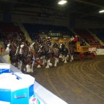 Six Horse Clydesdale Hitch-106