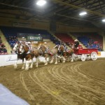 Six Horse Clydesdale Hitch-107