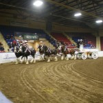 Six Horse Clydesdale Hitch-109