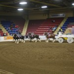 Six Horse Clydesdale Hitch-110