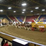 Six Horse Clydesdale Hitch-111