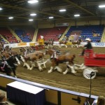 Six Horse Clydesdale Hitch-112