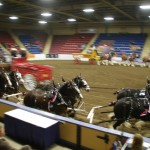 Six Horse Clydesdale Hitch-113