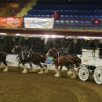Six Horse Clydesdale Hitch-115
