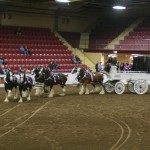 Six Horse Clydesdale Hitch-116