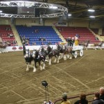 Six Horse Clydesdale Hitch-117