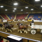 Six Horse Clydesdale Hitch-118