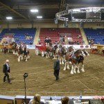 Six Horse Clydesdale Hitch-120