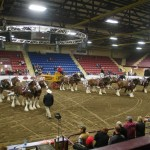 Six Horse Clydesdale Hitch-121