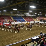 Six Horse Clydesdale Hitch-122
